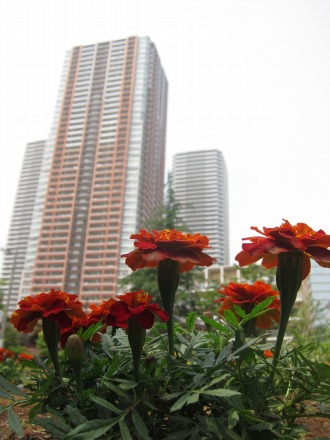 中丸子まるっこ公園の花壇