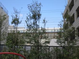 公園から見える新幹線