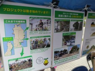 寄付先の植林プロジェクト
