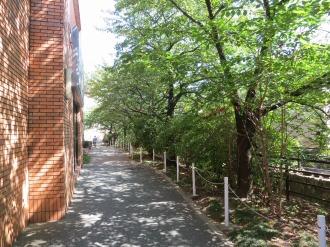 総合自治会館裏手の二ヶ領用水遊歩道