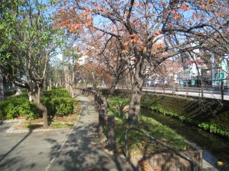 二ヶ領用水の八重桜