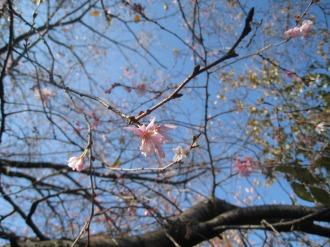 二ヶ領用水に咲く花