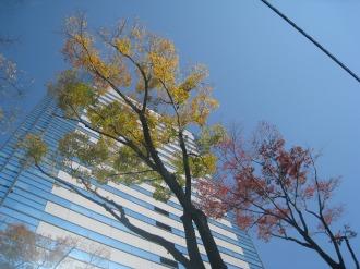 武蔵小杉タワープレイスと紅葉