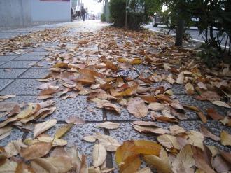 南武沿線道路の歩道の落ち葉