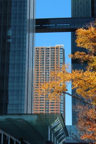 NEC玉川ルネッサンスシティの紅葉