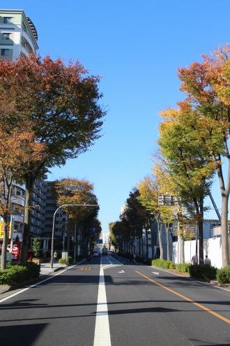 南武沿線道路の紅葉