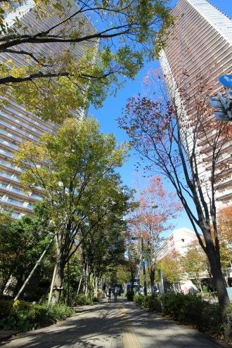 武蔵小杉駅南口線の街路樹
