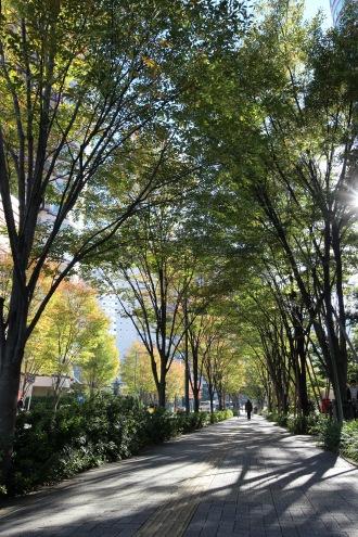 街路樹と木漏れ日