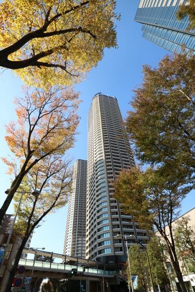 地上から見上げた紅葉とパークシティ武蔵小杉 ザ ガーデン