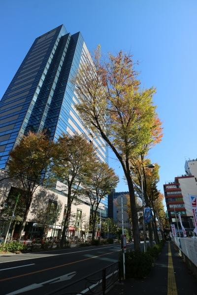 ケヤキの紅葉と武蔵小杉タワープレイス