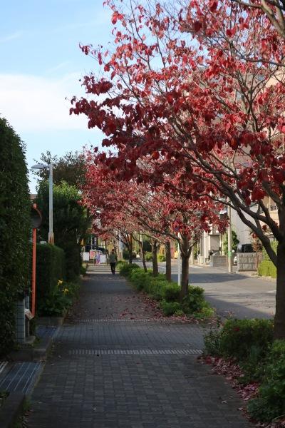 川崎市国際交流センターの紅葉