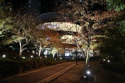 パークシティ武蔵小杉ミッドスカイタワー前の街路樹