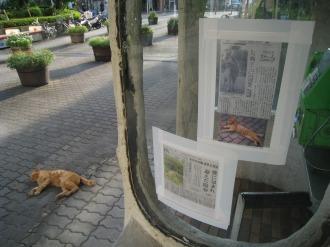 新聞記事と・・・ミーコ