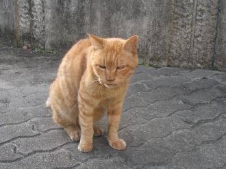 中原区役所の招き猫「ミーコ」