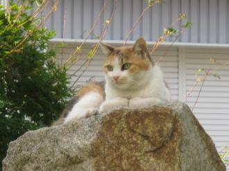 石塔の上の猫