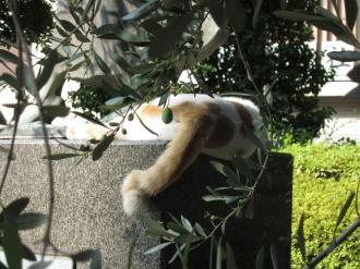 「平和の絆」の像の猫のしっぽ