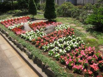 中原区役所近くの花壇