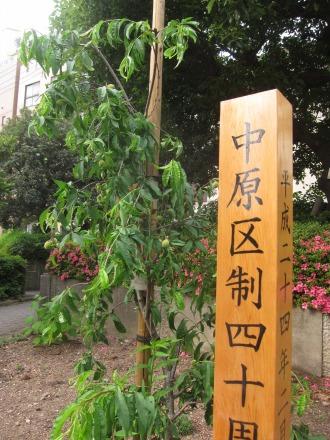 中原区役所の区制40周年記念植樹