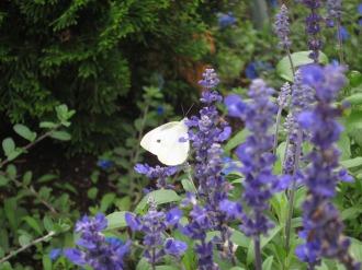 密を吸う蝶