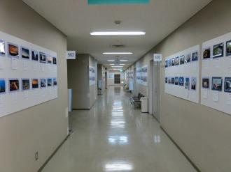 中原区役所5階に掲示された応募作品