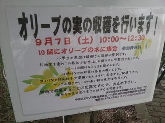 オリーブの実収穫の告知