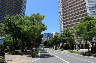 都市計画道路 武蔵小杉駅南口線のケヤキ
