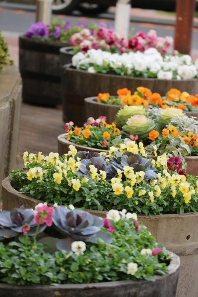 府中街道側の花壇