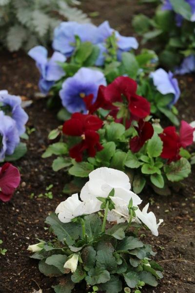 美しい花々