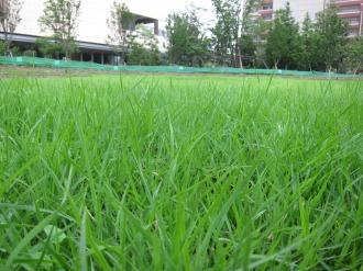 生い茂った芝生