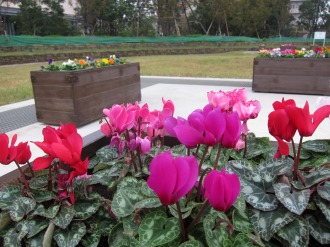 円形広場内の花壇