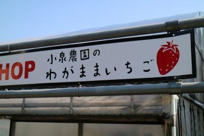 「小泉農園のわがままいちご」の看板
