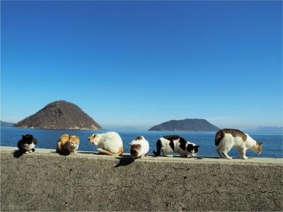 青島、愛媛県大洲市