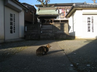 御蔵稲荷の猫