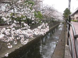 神地橋から見る二ヶ領用水