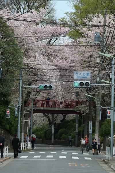 大田区側の旧中原街道「桜坂」
