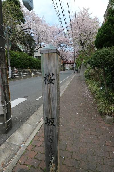 「桜坂」の木碑