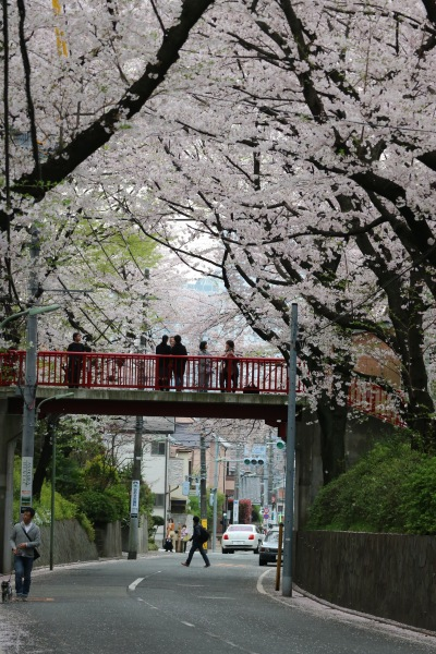ソメイヨシノが咲く頃の「桜坂」