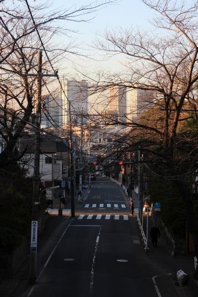 冬場の「さくら橋」から見た武蔵小杉の高層ビル群