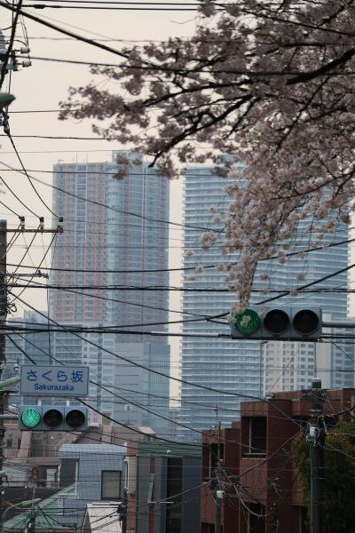 「さくら橋」の下から見た武蔵小杉の高層ビル群