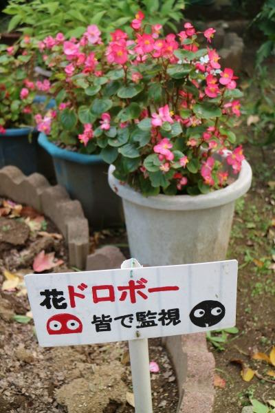 「花ドロボー皆で監視」