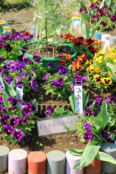 近隣保育園の花壇