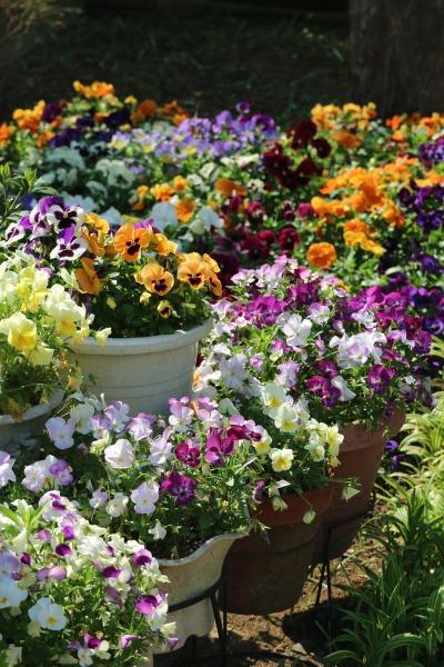 中丸子緑道の花壇