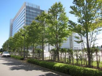 7・8号館跡地前の並木とソリューションセンター