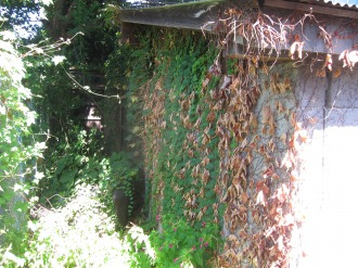 ツタの茂った弓道場の壁