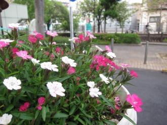 町工場の花