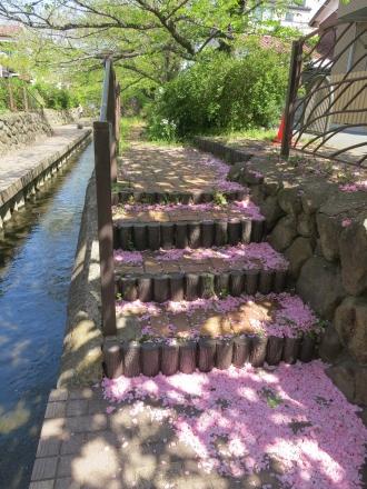 八重桜の花階段