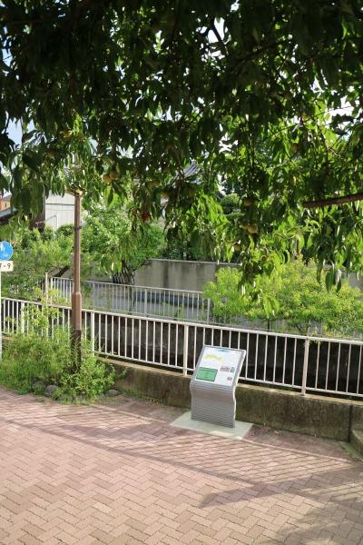 「こすぎごてんみどり歩道橋」前の桃の木と、二ヶ領用水の案内サイン