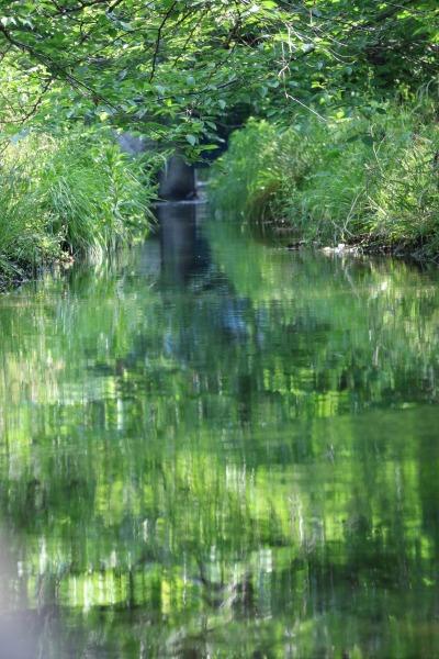 緑あふれる渋川