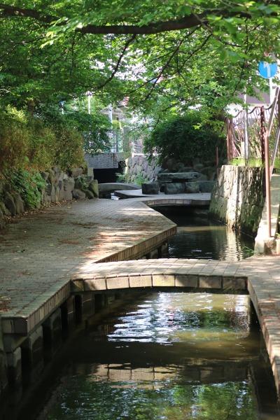新緑の渋川