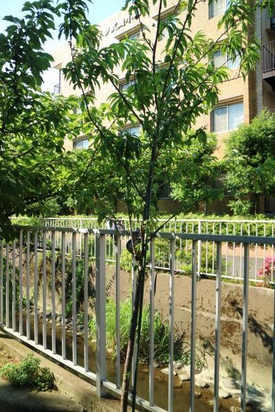 神地保育園の植樹